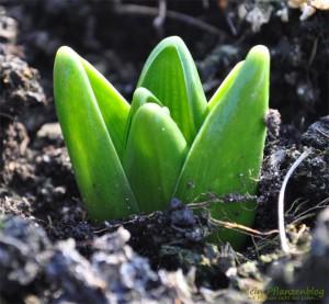 Pflanzentrieb