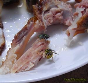 Wespe-beim-fressen