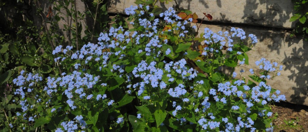 Blumen-1024x438.jpg