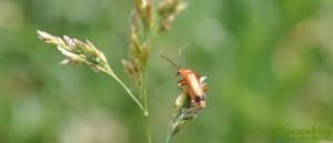 Insekt-Feld
