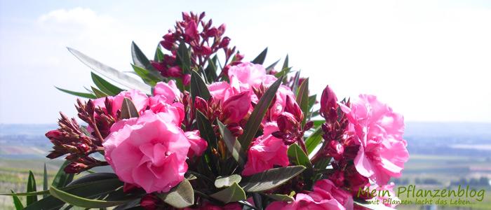 Gartenpflanzen » Mein-Pflanzenblog