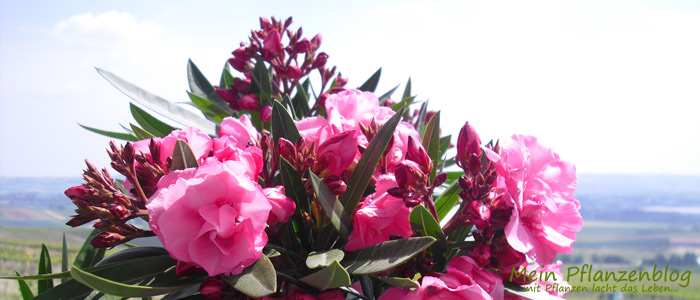gartenpflanzen » mein-pflanzenblog - Gartenpflanzen