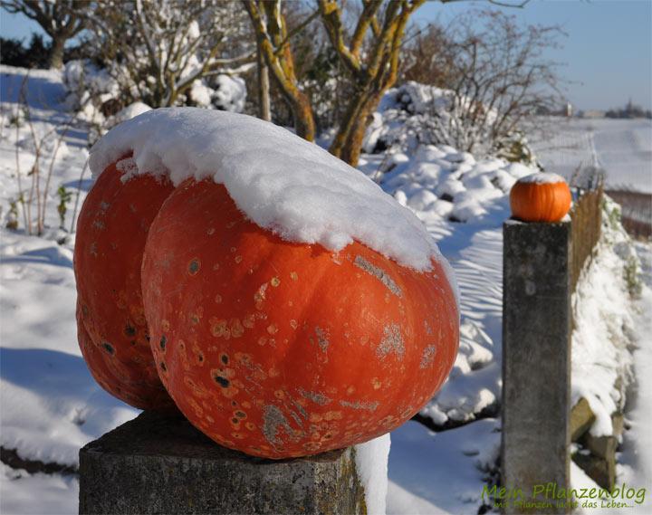Richtige pflege von balkonpflanzen im winter mein for Balkonpflanzen winter