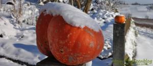 Winter-und-Kürbis
