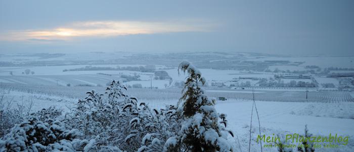 Winter-Landschaft.jpg