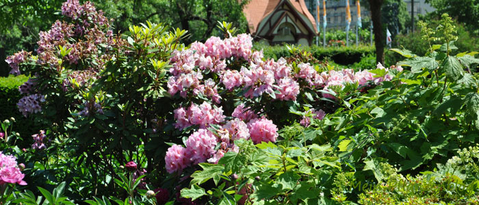 Bunte-Blumen.jpg