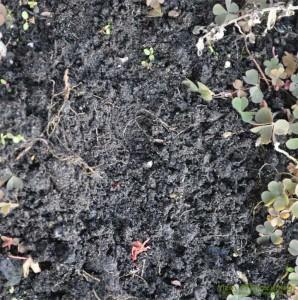 Garten-Boden
