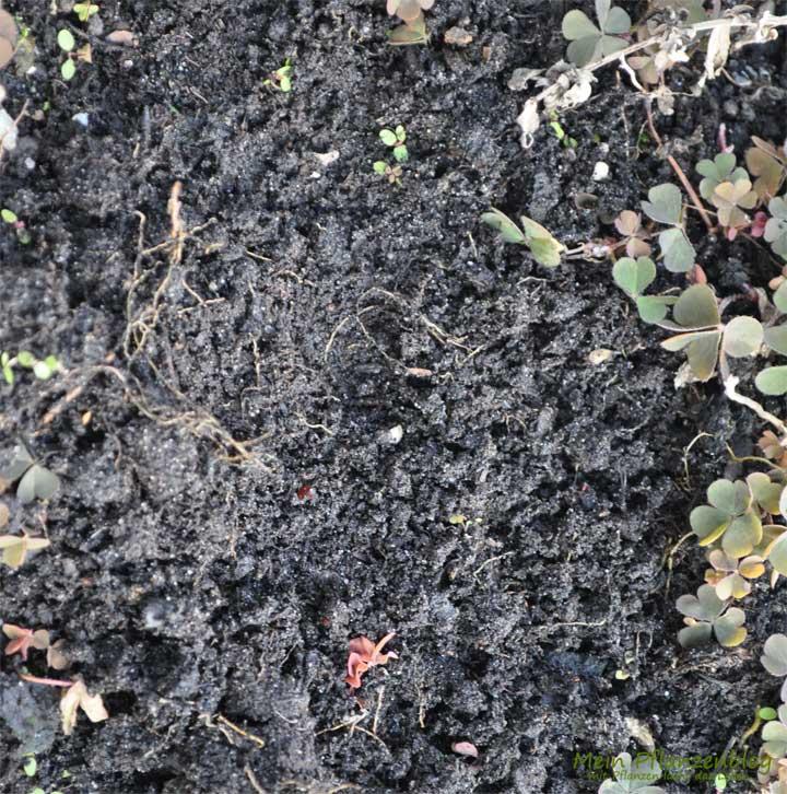 Garten Boden Mein Pflanzenblog