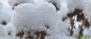 Balkonpflanze-im-Winter