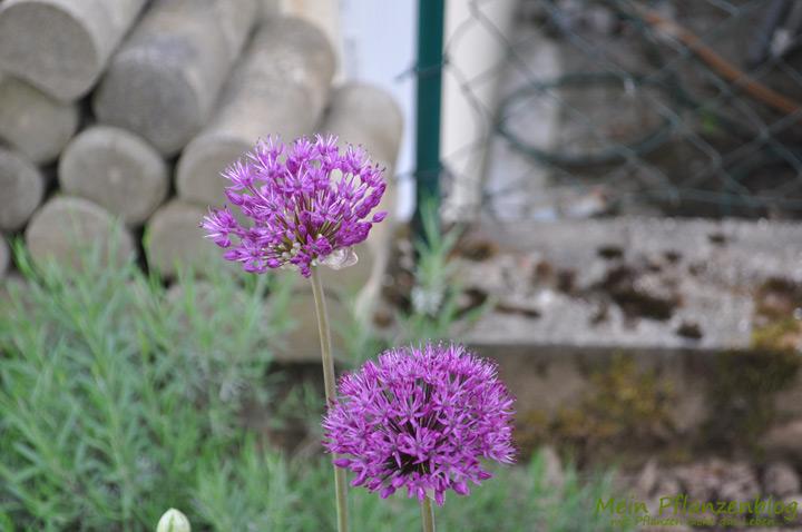 Feng-Shui auf der Terrasse und im Garten » Mein-Pflanzenblog
