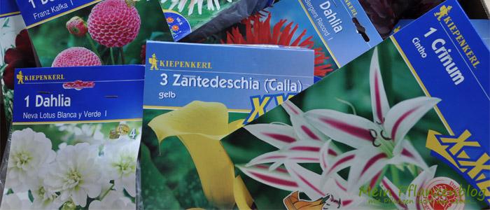 Blumenzwiebeln.jpg