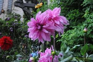 Garten-Blumen