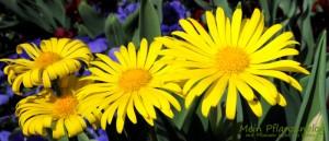 Gemischte-Blumen