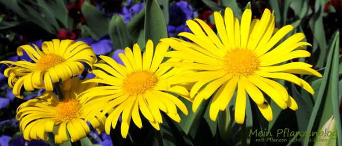Gemischte-Blumen.jpg