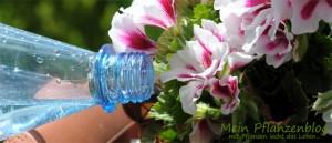 Gießen mit Mineralwasser