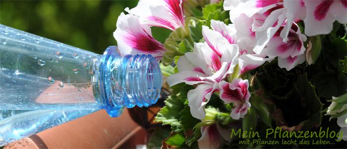 Gießen-mit-Mineralwasser.jpg