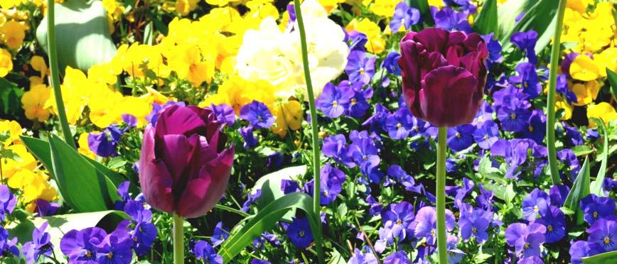 Blumenpracht.jpg