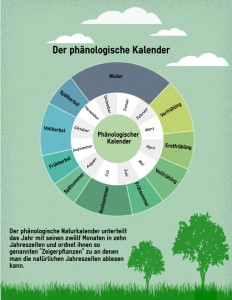Jahreszeiten-unsere-Pflanze