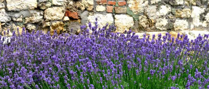 Garten-Kräuter-1.jpg