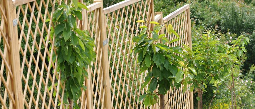 im herbst sind b ume bereit eingepflanzt zu werden mein pflanzenblog. Black Bedroom Furniture Sets. Home Design Ideas