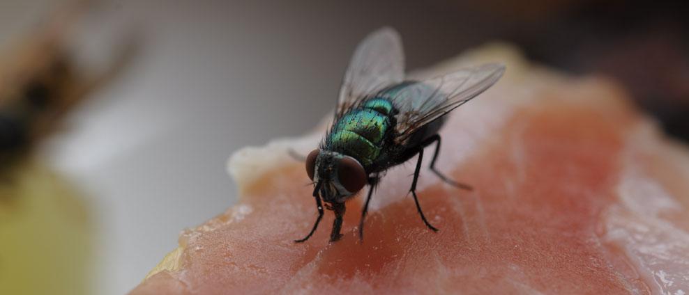 Fliege-mit-Futter-1.jpg