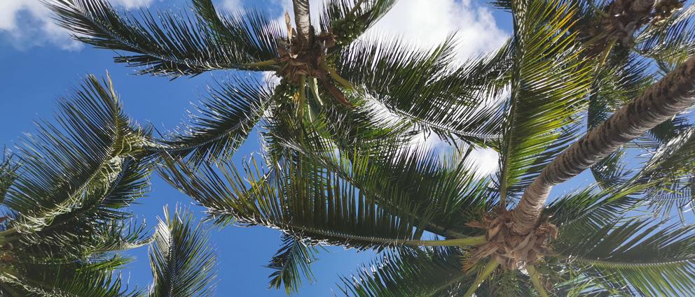 Palmen.jpg